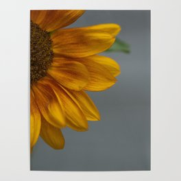 Sunflower in Yellow Poster