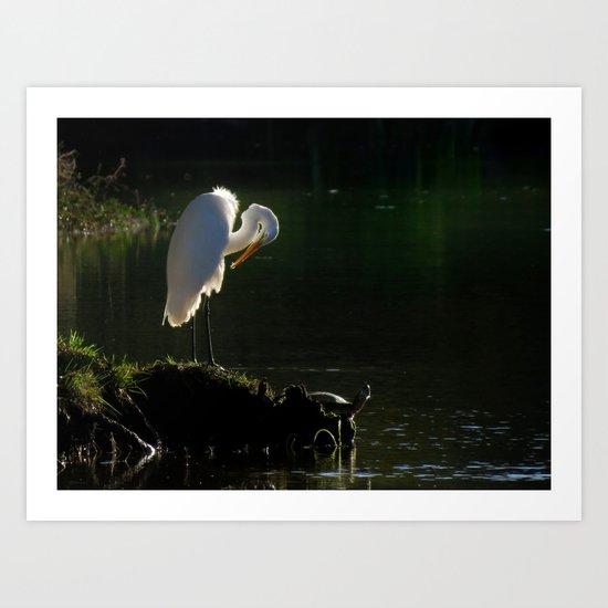 Egret at Evening Art Print