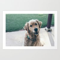 golden retriever Art Prints featuring Golden Retriever by CallieDavis