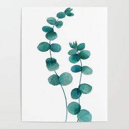 green eucalyptus watercolor Poster