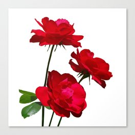 Roses are red, really red! Canvas Print