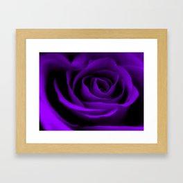A Purple Rose Framed Art Print