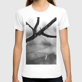 Linden Tree Branch In The Autumn Rain T-shirt