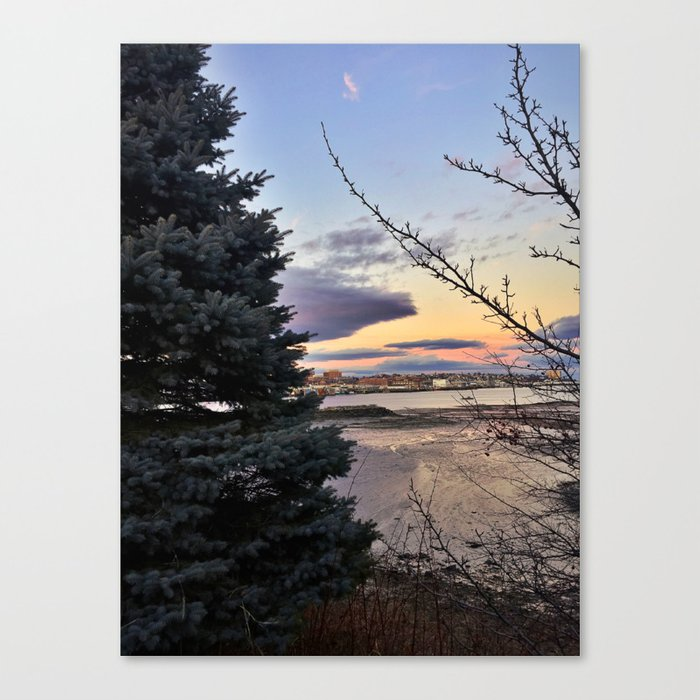 Picturesque Pine Tree at Thomas Knight Park in South Portland, Maine Canvas Print