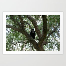 Monkeying Around 2 Art Print
