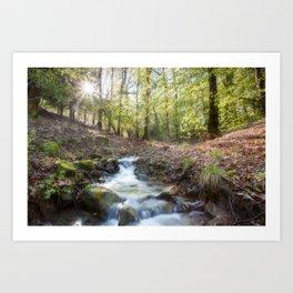 Enchanted Stream Art Print