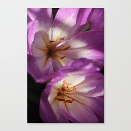 Purple Flower, Hansville, WA Canvas Print