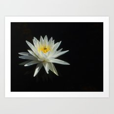 White Water Lily Visitor Art Print