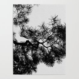 Pine Tree Black & White Poster