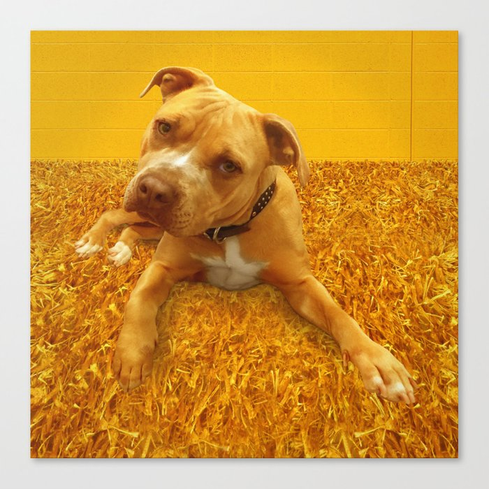 CHENiLLE (shelter pup) Canvas Print