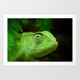 Green chameleon Art Print
