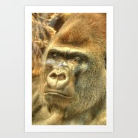 gorilla Art Prints featuring Gorilla by Doug McRae