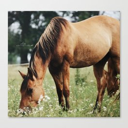 afternoon munchies Canvas Print