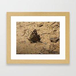 Brown Butterfly Framed Art Print