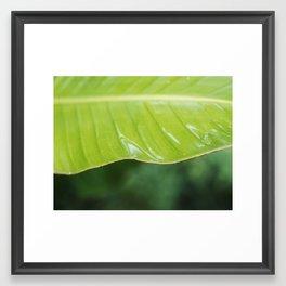 Wet Plants I Framed Art Print