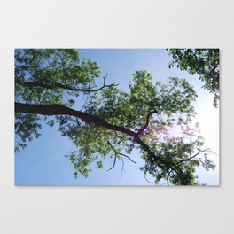 Look up, tree branch Canvas Print