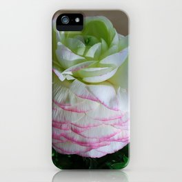 White and Pink Ranunculus iPhone Case