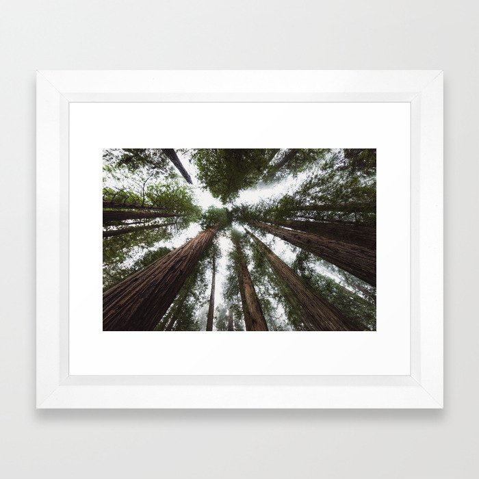 Redwood Portal - nature photography Framed Art Print by travel ...