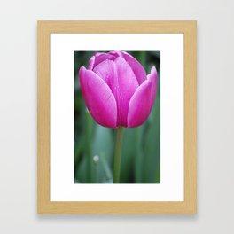 Pink Tulip Framed Art Print