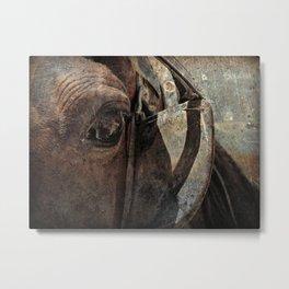 Amish Horse Rusty Grunge Metal Print
