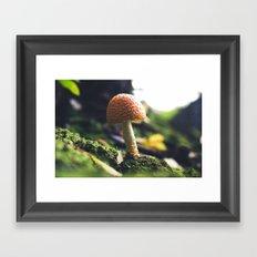 Fly Agaric Framed Art Print