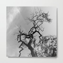 Old Spooky Bare Tree Branches Metal Print