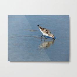 Reflective sandpiper Metal Print