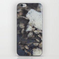 snow and hydrangea iPhone & iPod Skin