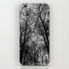 Trees at Mottisfont iPhone & iPod Skin