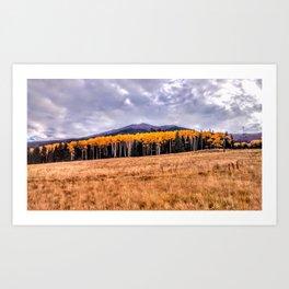 Aspens North of Flagstaff Arizona - Humphreys Peak Art Print