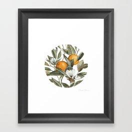 Orange Blossom Framed Art Print