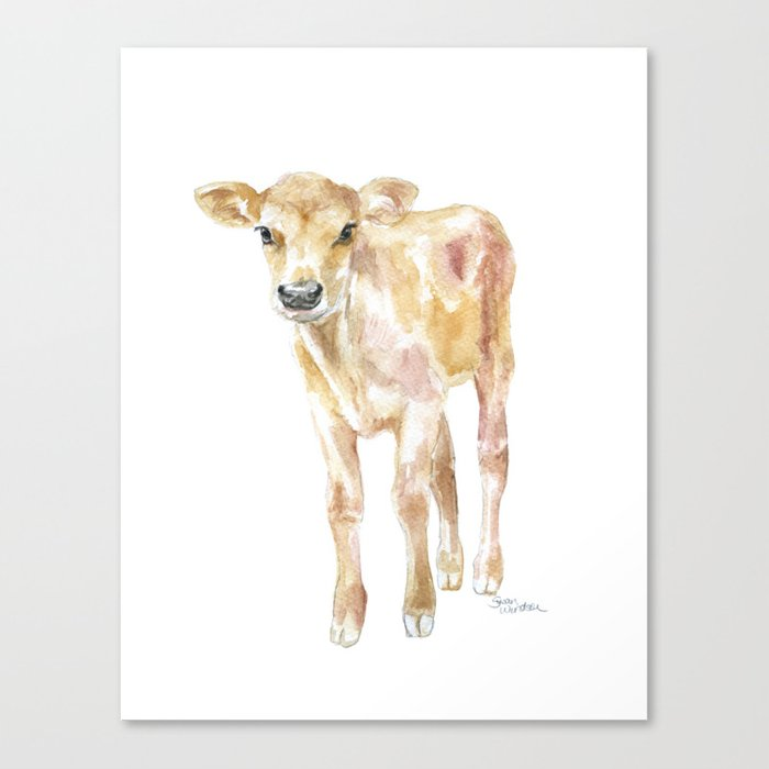 Jersey Calf Watercolor Cow Canvas Print