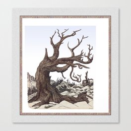 ANCIENT PINE SNAG VINTAGE PEN DRAWING Canvas Print