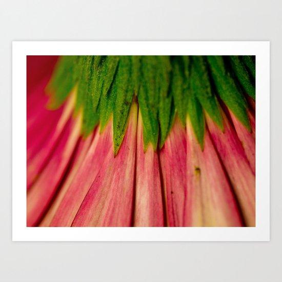 Petals of Pink Art Print