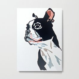 Boston Terrier Dog Portrait Metal Print
