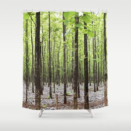 Teak Forest in Guanacaste, Costa Rica Shower Curtain