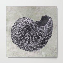 Ammonite study Metal Print