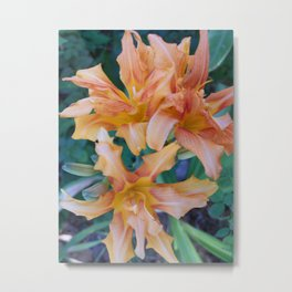 Tiger Lilly's in Spring II Metal Print