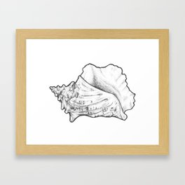 Conch Shell Framed Art Print