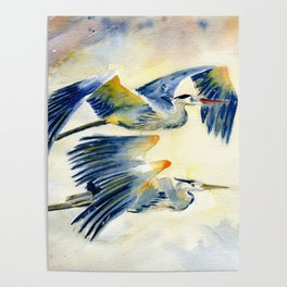 Flying Together - Great Blue Heron Poster