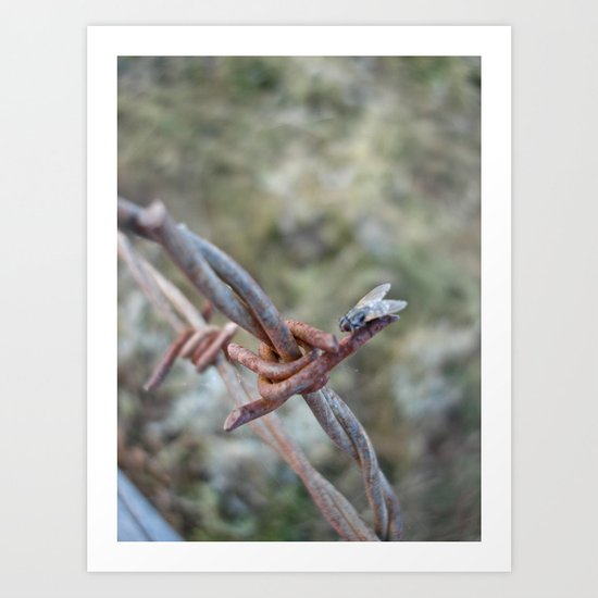 Fly Meets Barbed Wire Art Print