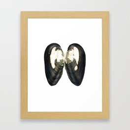 Thick Shelled River Mussel (Unio crassus) Framed Art Print