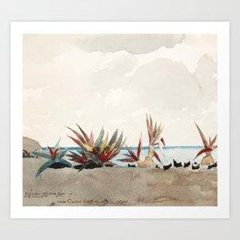 Nassau Beach with Century Plants by Winslow Homer, 1889 Art Print