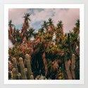 Cactus_0016 by coyotecactuscreative