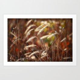 Foxtails I Art Print