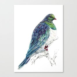 Mr Kereru, New Zealand native wood pigeon Canvas Print