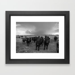 Hanging Out - Black and White Photo of Cows in Kansas Framed Art Print