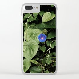 Florida: Morning Glory Portrait (faded) Clear iPhone Case