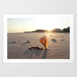 Floating Shell Art Print