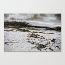 Scooter I Canvas Print